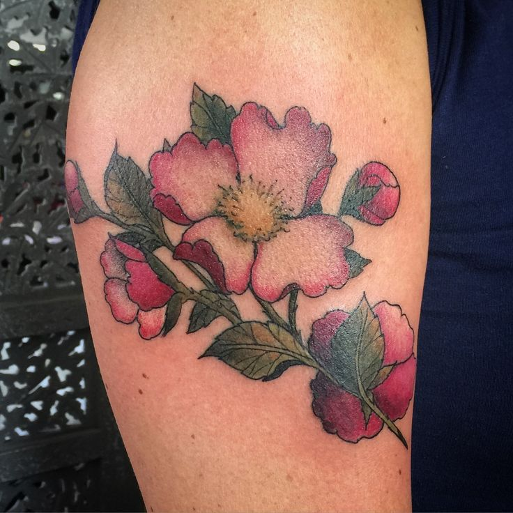Wild rose  Wild rose tattoo done by Sandi @sandicustomtattoo