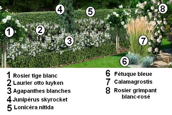 Créer un jardin blanc : plan d'un jardin blanc