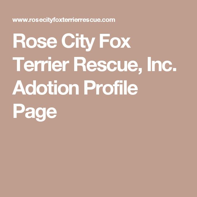 Rose City Fox Terrier Rescue, Inc. Adotion Profile Page