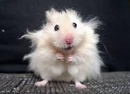 """Képtalálat a következőre: """"fuzzy animals"""""""