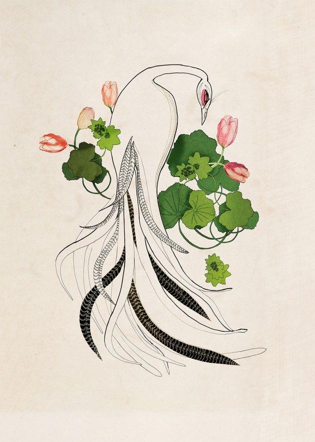 Daggkåpa vit fågel illustration by Anna Handell Montage #nordicdesigncollective #annahandellmontage #ladyssmantle #whitebird #bird #animal #flowers #leaves  #tale