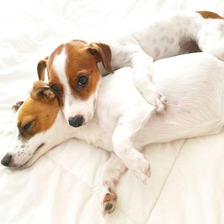 woman-having-jack-lick-love-n-russell-terrier-public-having-sex