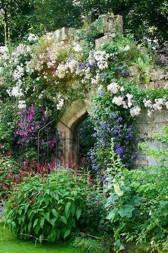 Plants are the strangest People: Old English Garden Charm...