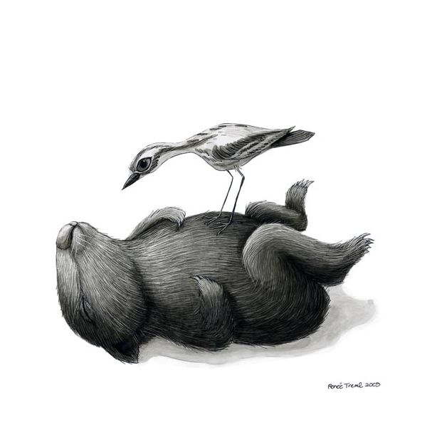 renee treml art | Renee Treml small print - tired wombat with one curlew