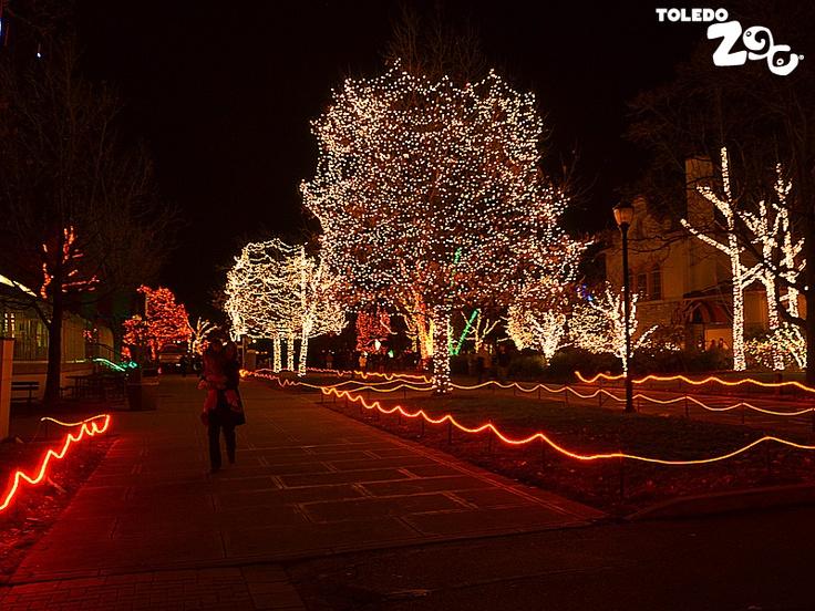 Toledo Zoo Christmas Lights