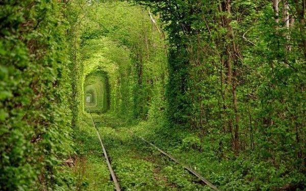 Diez túneles de arboles en los que querrás adentrarte (FOTOS)