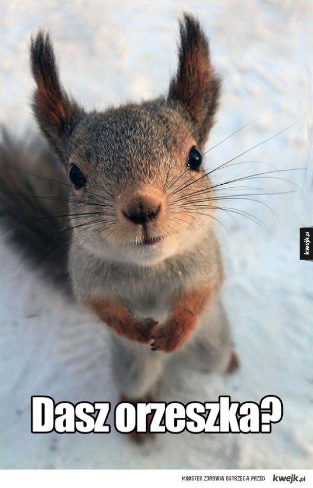 Odmówisz wiewiórowi?
