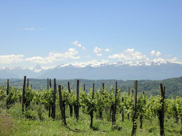 Vue sur les vignes de Jurançon