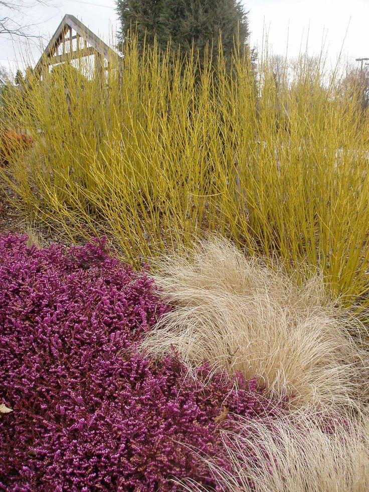 CUH Updates « UW Botanic Gardens News