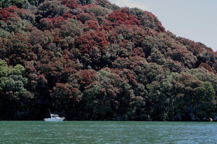 Pohutukawa trees lining the shores of Lake Tarawera. Photo taken by David Walmsley.