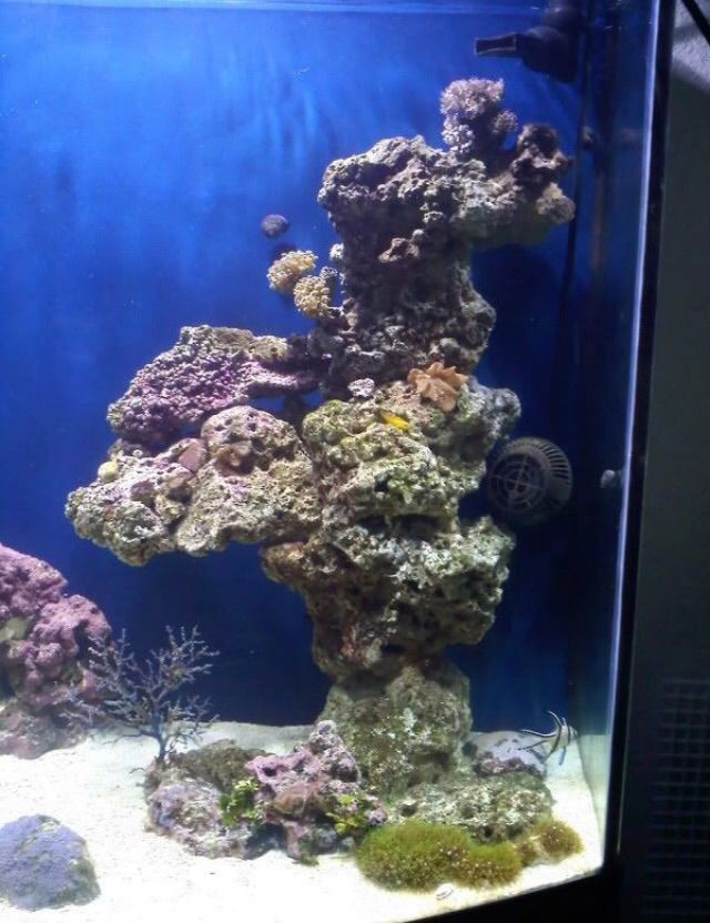 How To Get Coralline Algae To Grow On Dry Rock