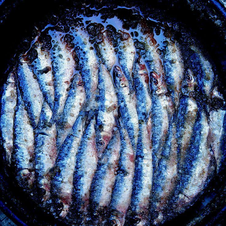 Salted anchovies Adriatic Photographer: Damir Fabijanić
