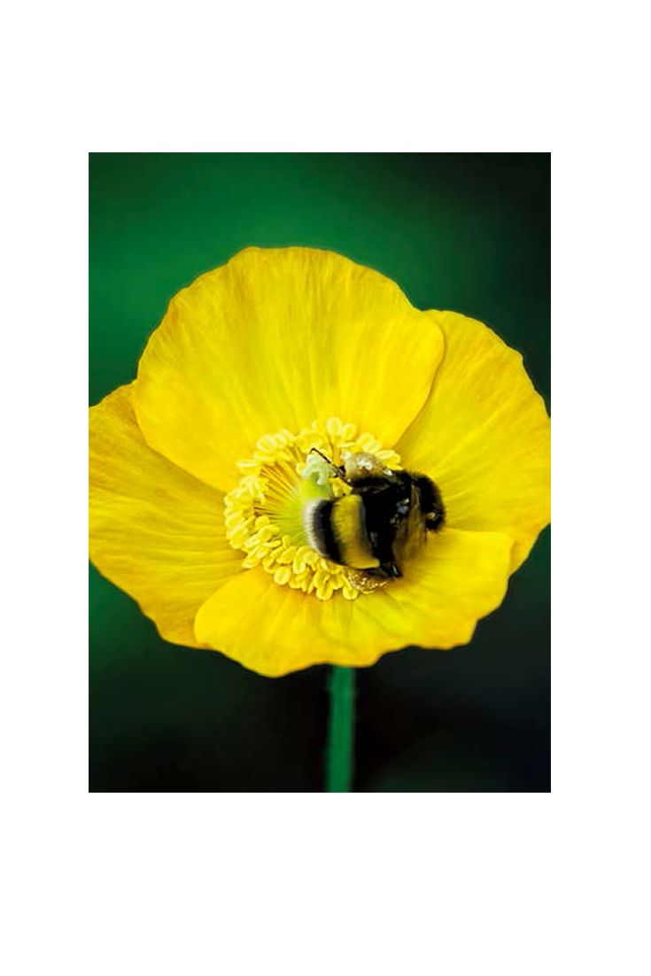 Amazing Bee Wall Art canvas for indoor and outdoor home decor