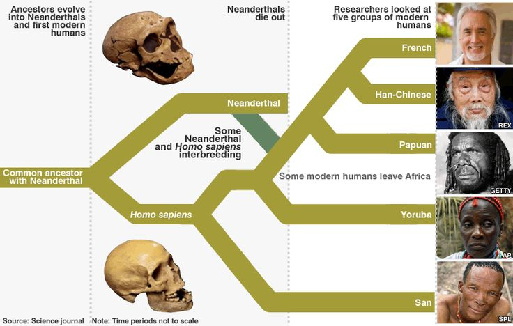 Human and Neanderthal interbreeding