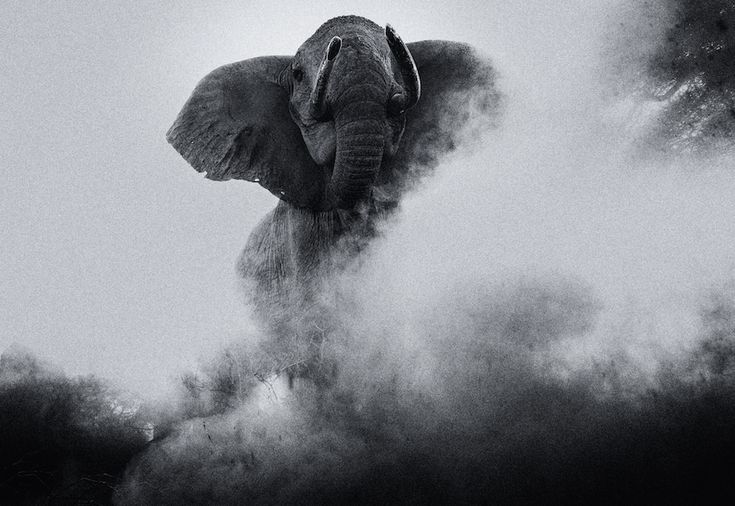 Changing World by Michael Fell. A elephant in a dusty land.