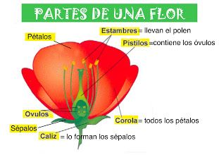 Foto Partes De Una Flor Partes De La Flor Ciencias Naturales 4 Ciencias Naturales