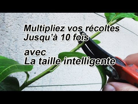 Multipliez vos récoltes de 2 à 10 fois avec la taille en vert ou taille d'été intelligente - YouTube