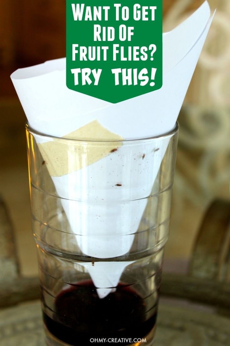 How to get rid of fruit flies? Try this quick and EASY way to make a Fruit Fly Trap...works so well! Make an easy Fruit Fly Trap using things from the home.