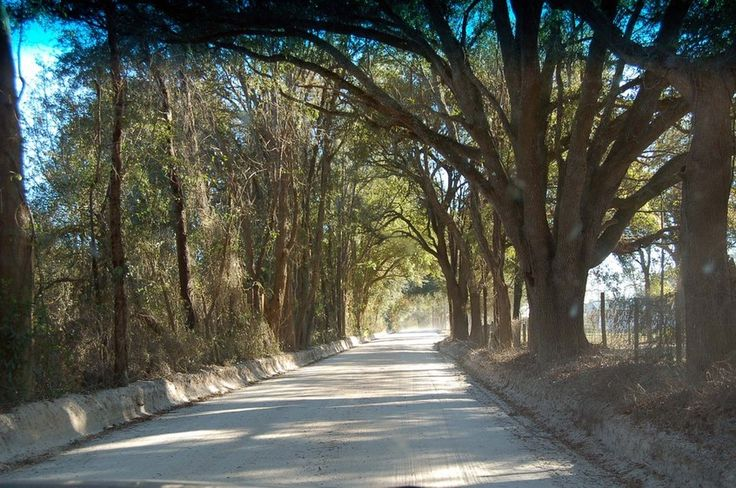Sand Road in rural Columbia County, Florida. This is the type of road that Jack and Zeke ran on after they saw a body dumped in the Santa Fe River.