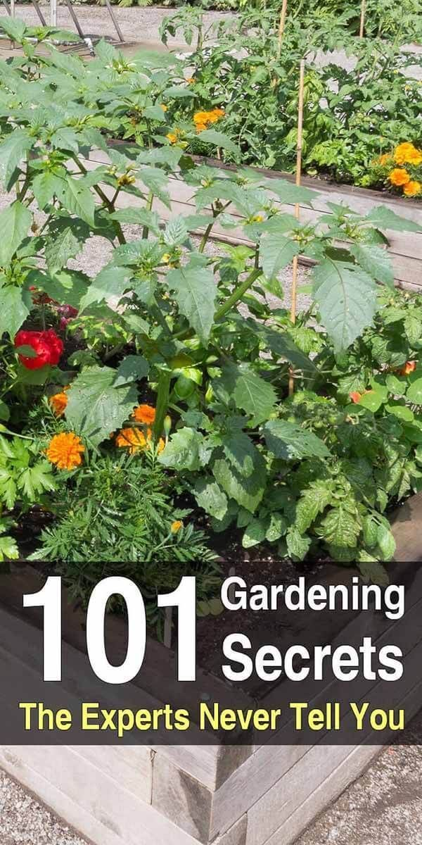 101 Gardening Secrets The Experts Never Tell You Home Vegetable Garden Gardening Tips Growing Vegetables