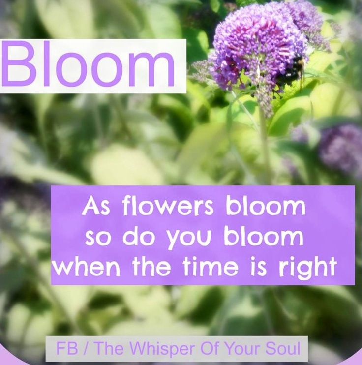Bloom Like Flowers Quote Via Facebookthewhisperofyoursoul