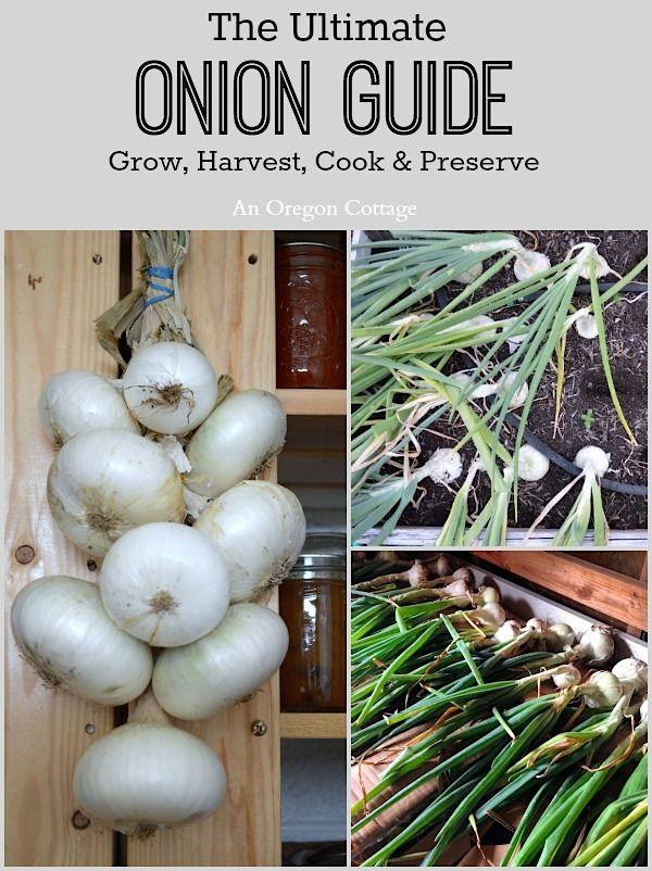 Ultimate Onion Guide-Grow, Harvest, Cook & Preserve via An Oregon Cottage