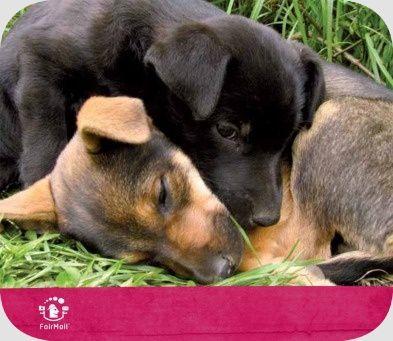 Puppy Card   @FairMail - Fair Trade Cards - S320-E