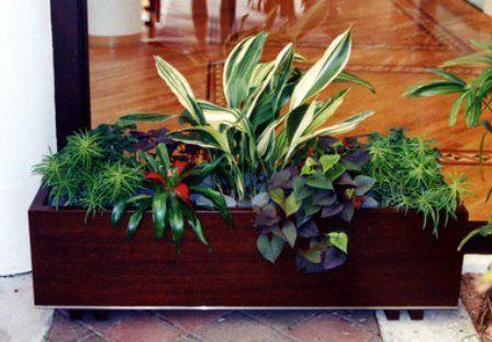 композиция из разных растений