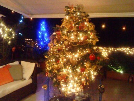 ooo...Christmas tree...!!