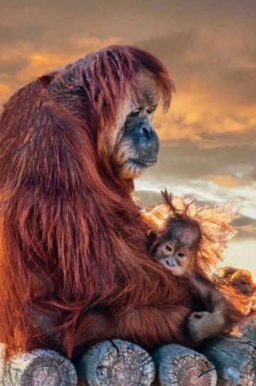 fotos de monos bebes feos