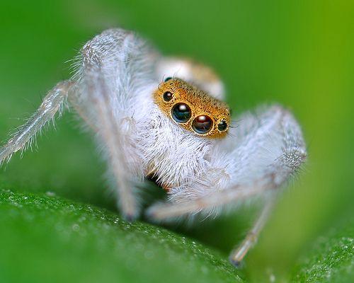 orb spider judith beveridge essay
