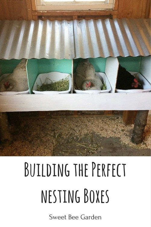 We've tried several different styles of nesting boxes on the homestead, but have finally figured out what works best for us! Read more for what we think is the perfect design.