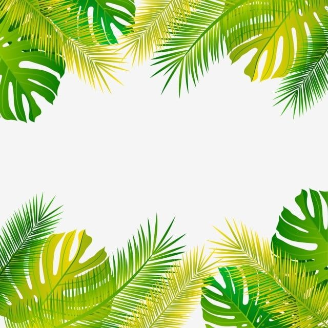 Forest Tropical Leaves And Leaf Plant Palm Frame Plant Clipart Palm Tropical Png And Vector With Transparent Background For Free Download Poster Bunga Daun Kelapa