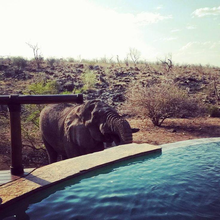 Little Tuningi Swimming pool with a visit from a big bull elephant during the hot summers day Photo Credit: Chantelle Terblanche