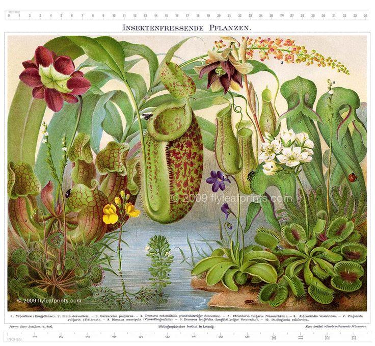 Carnivorous Plants Illustration
