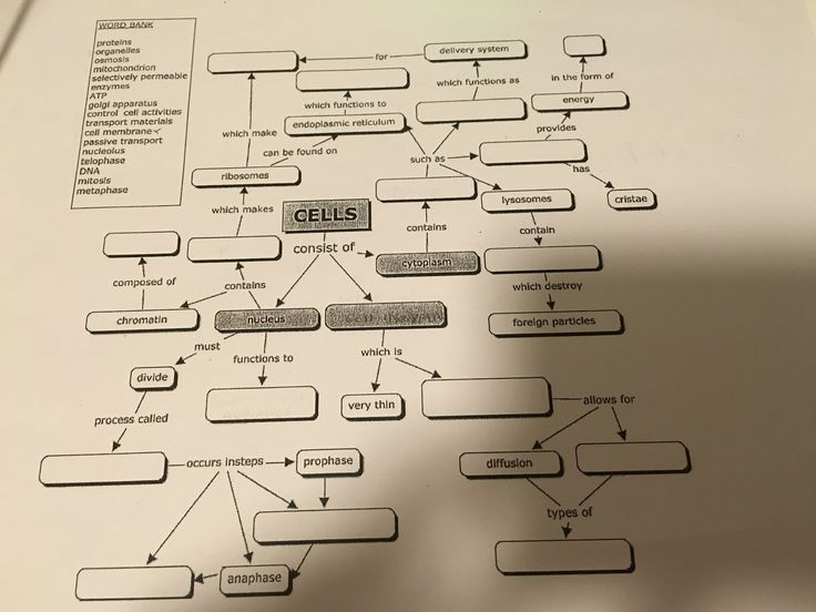 Anatomy Cell Concept Map Answer Key | Campus Map in 2020 ...