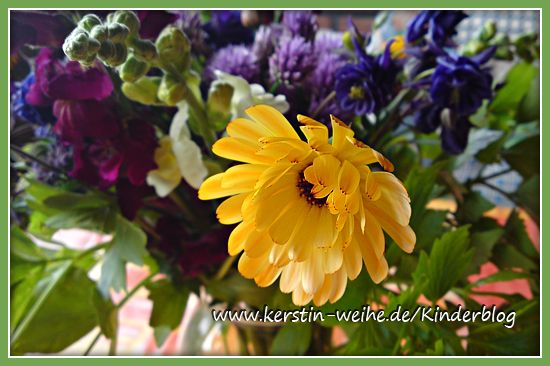 Ein bunter Blumenstrauß aus unserem Garten  Akelei, Ringelblumen, blühender Schnittlauch, Löwenmäulchen, Katzenminze, und Liebstöckel (Maggikraut)