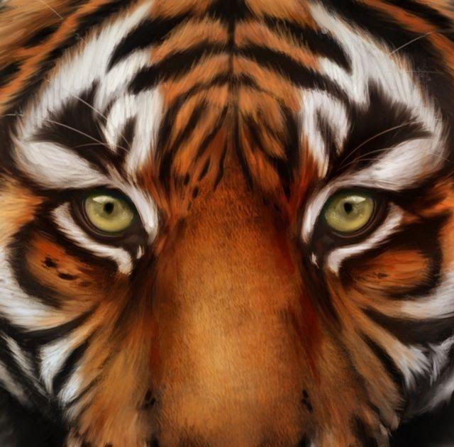 20 I Phone Wallpaper Tiger Di 2020