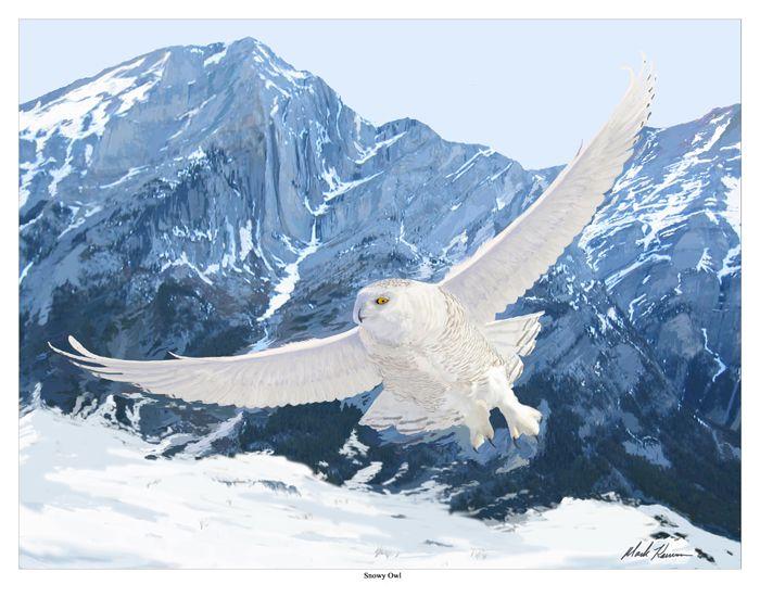Snowy owl | Snowy Owl (Great White Owl)