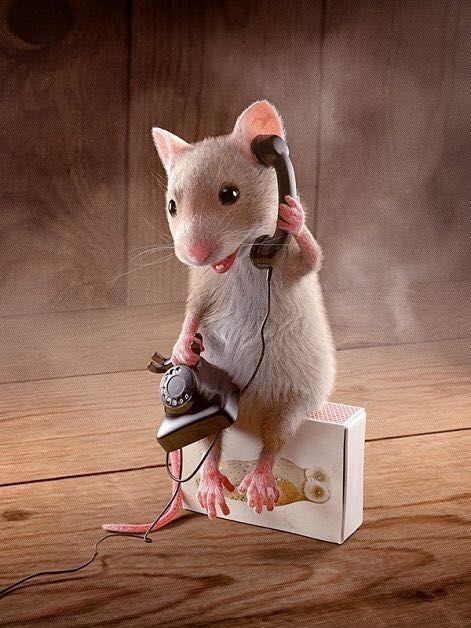 Открытка, прикольные картинки про мышат