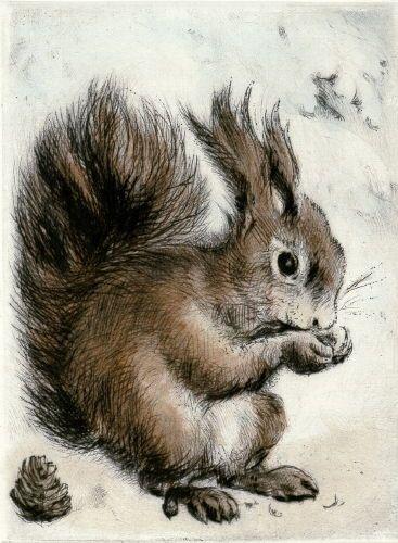 """Peters - """"Eichhörnchen"""" (Radierung)"""