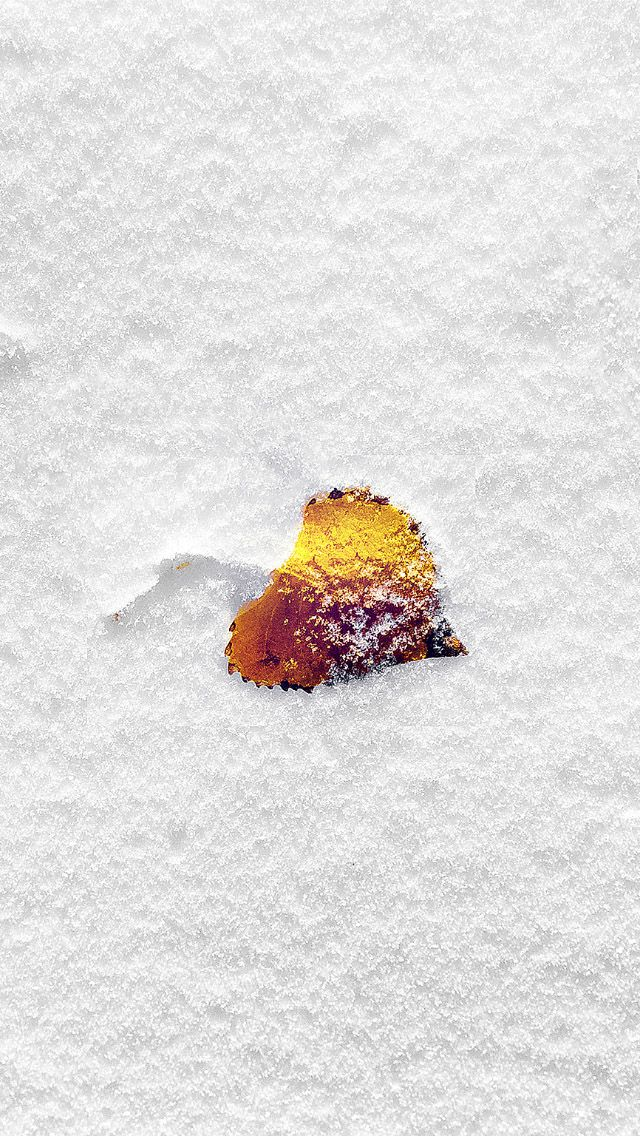 yellow leaf in snow filed  #iPhone #5s #Wallpaper
