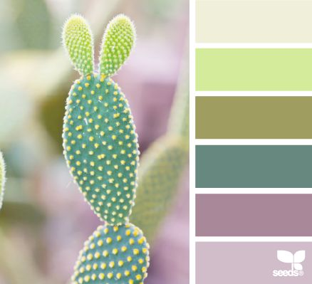 cacti color for guest room