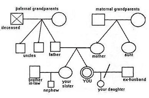 1000 images about 3 generation family genogram on for Family history genogram template