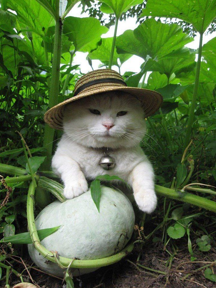 Cats in hats - Follow us @showmeCats -  #showmecats #thefashionista #FashionCats