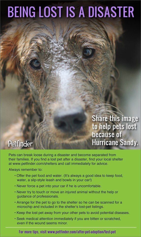 BEING LOST AFTER SANDY IS A DISASTER~If you find a pet offer food & water; don't force them into your car; never touch or move an injured animal-seek professional help; scan for microchips; add to lost pet lists; keep away from your pets to avoid diseases; seek medical attention if bitten or scratched. check: www.petfinder.com/after-pet-adoption/lost-pet   SHARE THIS TO HELP PETS LOST BECAUSE OF HURRICANE SANDY. BE PROACTIVE IF YOU FIND A LOST ANIMAL & HELP THEM GET BACK HOME. WE CAN DO…