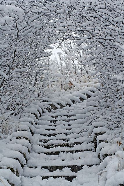 Stairway to morning light | by withrow Omgosh! This is awesome I want to live here a season out of the year.