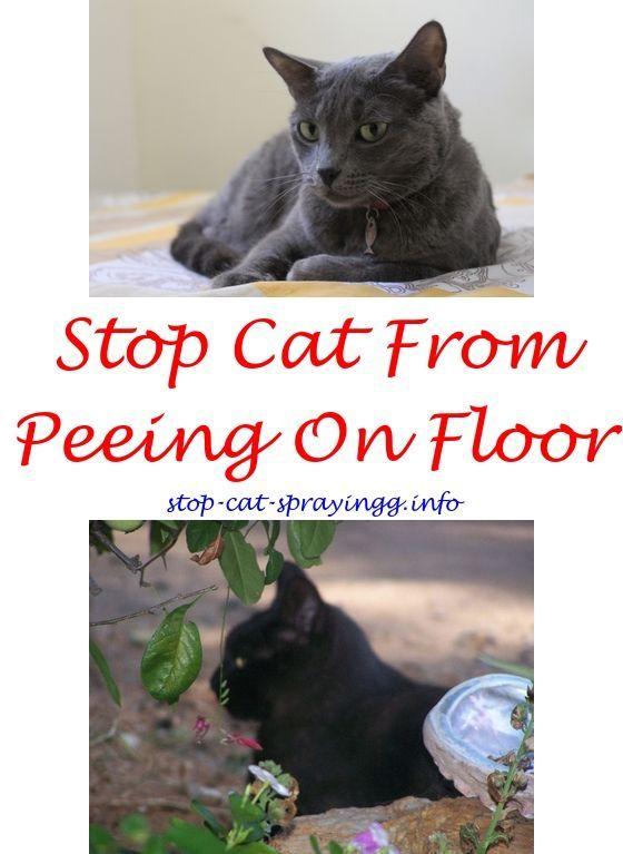 Cat Bad Breath Spray Flea Spray For Cats Cat Pee Cat