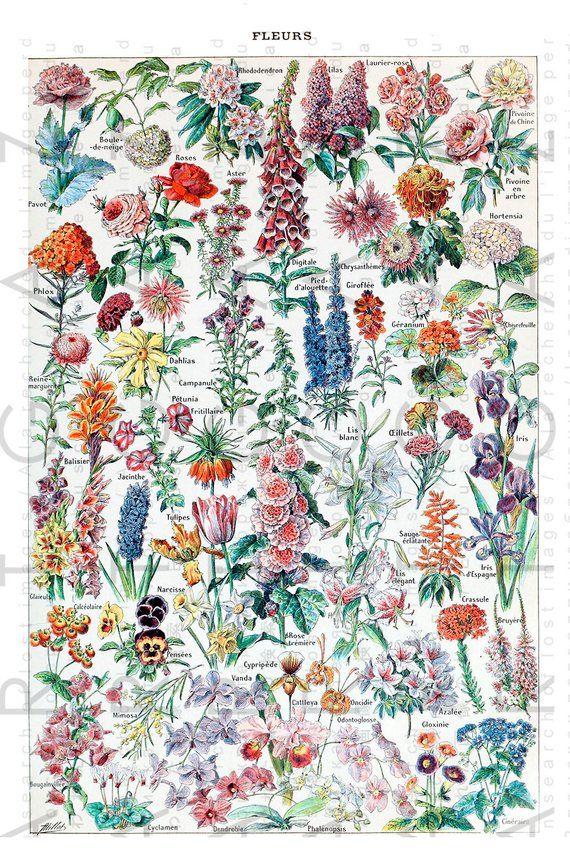 Flowers Vintage Larousse Poster Adolphe Millot Digital Download