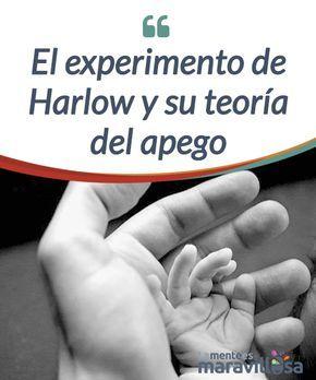 El experimento de Harlow y su teoría del apego   La #teoría del apego fue revelada por Bowlby, pero Harlow quiso comprobarla con un #experimento real, con monos Rheus a los que #torturó.  #Psicología
